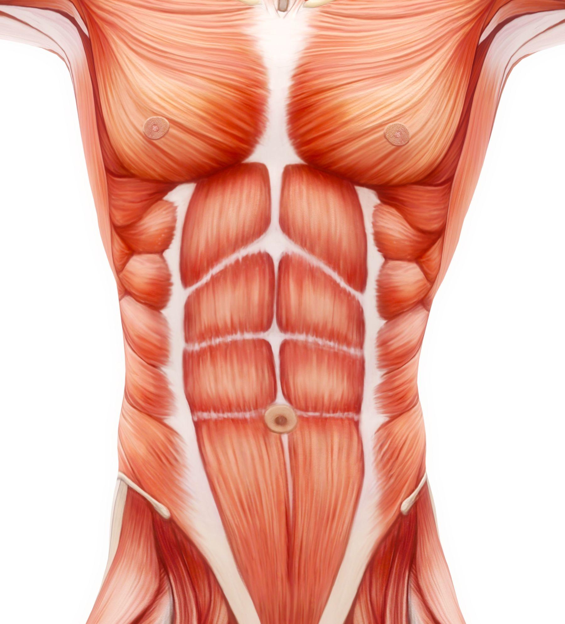 façons de perdre de la graisse et dobtenir des abdos