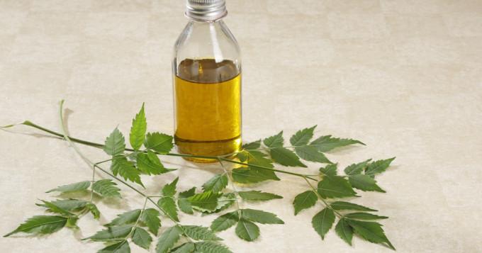 perte de poids feuilles de neem