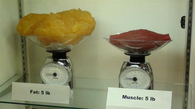 Perdre du gras: les meilleurs moyens prouvés scientifiquement