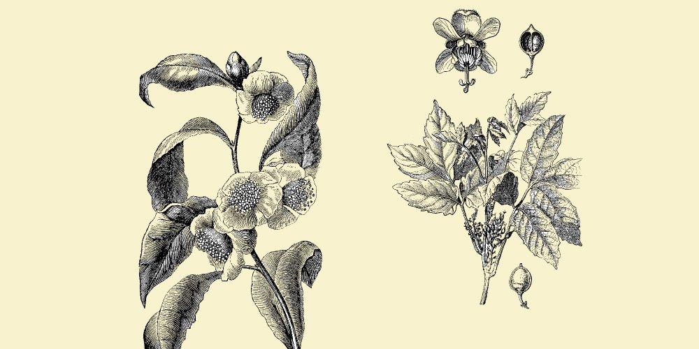 corps mince à base de plantes cara minum perte de graisse sur labdomen