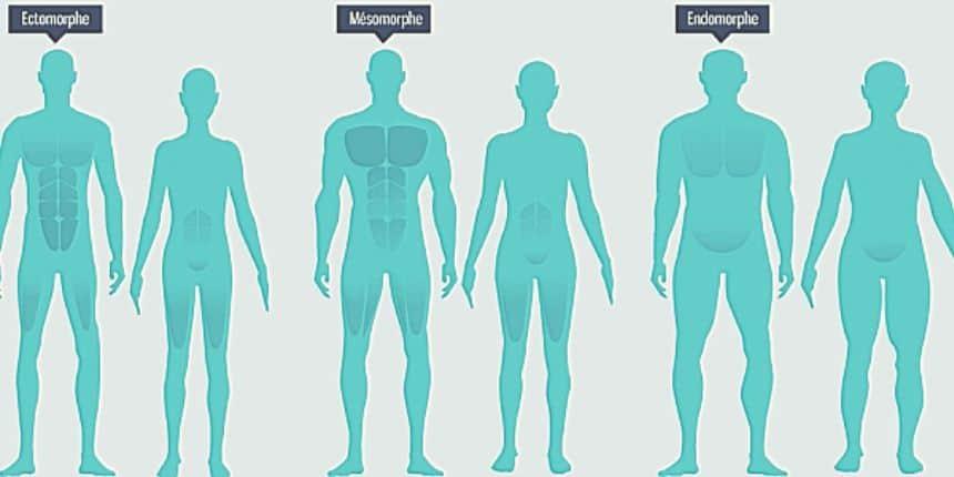 Ectomorphe, endomorphe, mésomorphe : les trois morphotypes à connaître
