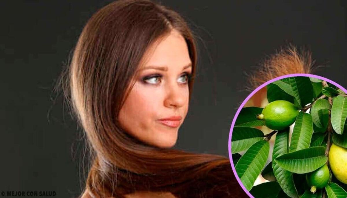 perdre du poids avec des feuilles de goyave migraine qui entraîne une perte de poids