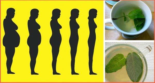"""Phytothérapie : 8 plantes """"brûle-graisse"""" vraiment efficaces : Femme Actuelle Le MAG"""