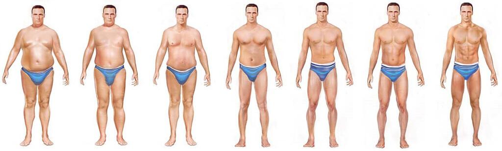 progression de la perte de graisse