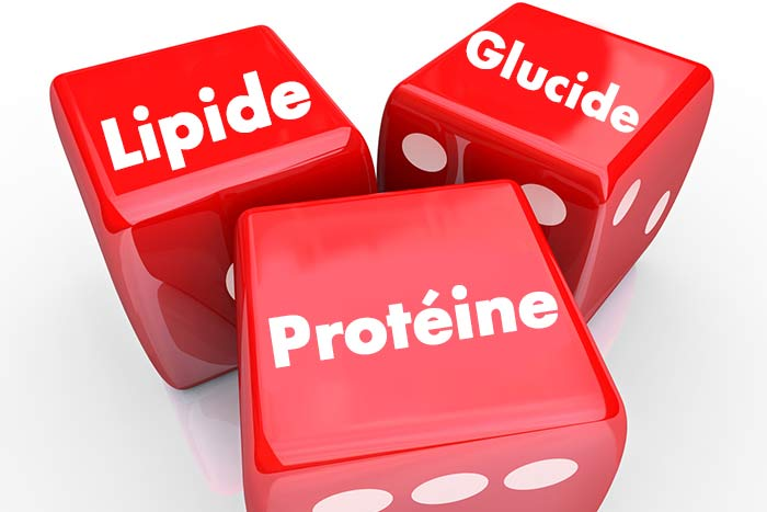 macros pour lendomorphe féminin de perte de graisse